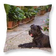Big Black Schnauzer Dog In Italy Throw Pillow