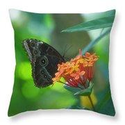 Big Boy Butterfly Throw Pillow