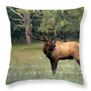 Big Boy Number Sixty-seven Another Year Older Throw Pillow