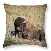 Big Buff - Bison - Buffalo - Yellowstone National Park - Wyoming Throw Pillow