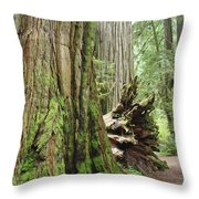 Big California Redwood Tree Forest Art Prints Throw Pillow