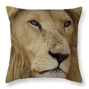 Big Cats 15 Throw Pillow