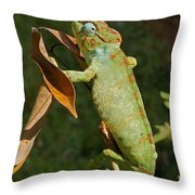 big chameleon of Madagascar 20 Throw Pillow