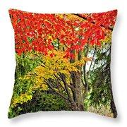 Big Colorful Sleep Throw Pillow
