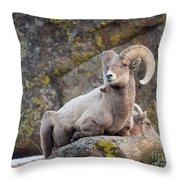 Big Horn Throw Pillow