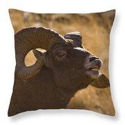 Big Horn Ram   #4856 Throw Pillow