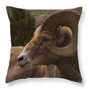 Big Horn Ram   #5098 Throw Pillow