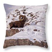 Big Horn Ram   #7036 Throw Pillow