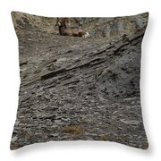 Big Horn Ram   #9264 Throw Pillow