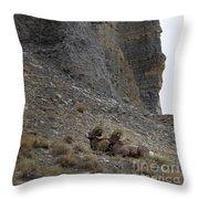 Big Horn Rams   #9148 Throw Pillow