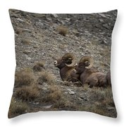 Big Horn Rams   #9157 Throw Pillow