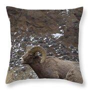 Big Horn Rams And Hoo Doos   #6587 Throw Pillow