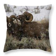 Big Horn Rams In Snow   #2484 Throw Pillow