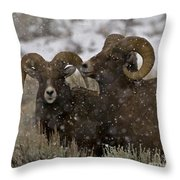 Big Horn Rams In The Snow   #2493 Throw Pillow