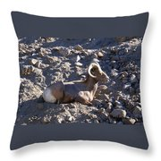 Big Horn Sheep Close Up Throw Pillow