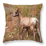Big Horn Sheep Ewe Throw Pillow