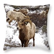 Big Horn Sheep In The Snow Throw Pillow