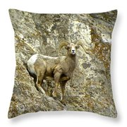 Big Horn Sheep On Mountain Throw Pillow