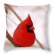 Big Red  Cardinal Bird In Snow Throw Pillow