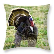 Big Tom Throw Pillow