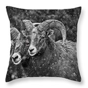 Bighorn Brothers In Grey Colorized Throw Pillow