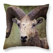 Bighorn Country Throw Pillow