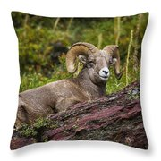 Bighorn Ram 3 Throw Pillow