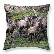 Bighorn Reunion Throw Pillow