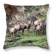 Bighorn Row Throw Pillow