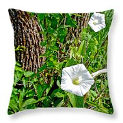 Bindweed In Pipestone National Monument-minnesota Throw Pillow