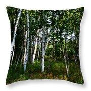 Birch Grove In The Sunlight Throw Pillow