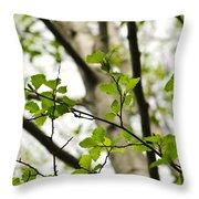 Birch Tree In Spring Throw Pillow