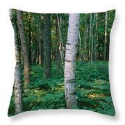 Birch Trees In A Forest Throw Pillow