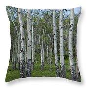 Birch Trees In A Grove No. 0148 Throw Pillow