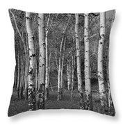 Birch Trees No.0148 Throw Pillow