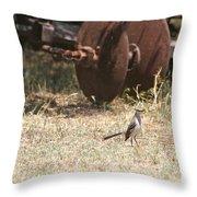 Bird Alert Throw Pillow