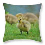 Bird - Baby Goose -leader Of The Pack Throw Pillow