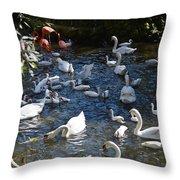 Bird Bash Throw Pillow