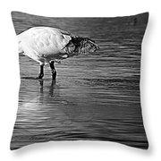 Bird Drinking Throw Pillow