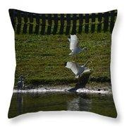 Bird Fight Throw Pillow