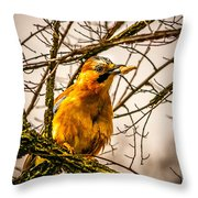 Bird Holding Food In Mouth Throw Pillow