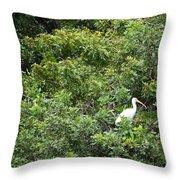 Bird In Bush Throw Pillow