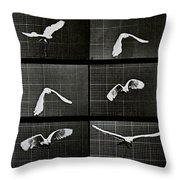 Bird In Flight Throw Pillow by Eadwerd Muybridge