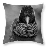 Bird In Your Face Bw Throw Pillow