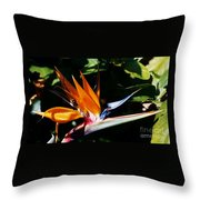 Grotto Bay Bird Of Paradise # 1 Throw Pillow