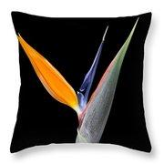 Bird Of Paradise #2 Throw Pillow