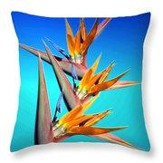Bird Of Paradise 2013 Throw Pillow