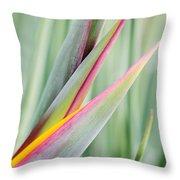 Bird Of Paradise Flower Bud Throw Pillow