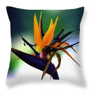 Bird Of Paradise Flower - Square Throw Pillow
