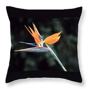 Bird Of Paridise Throw Pillow